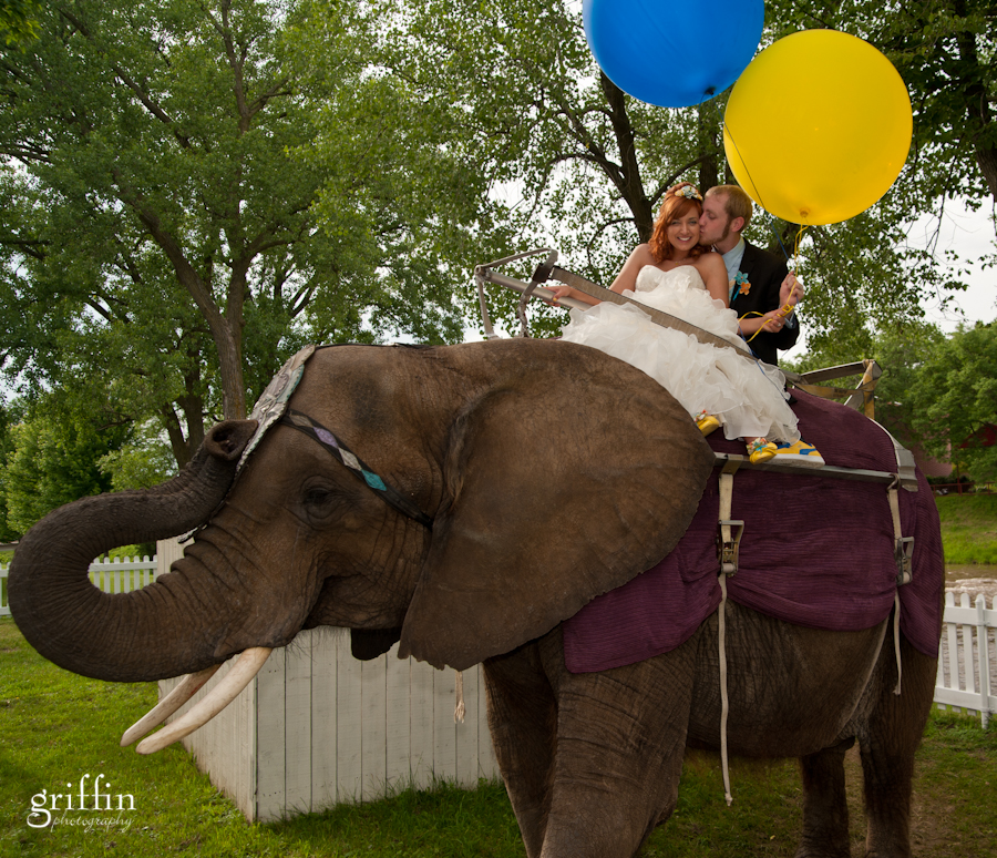 Bride and groom riding an elephant at the Ringling Bros. Circus in Baraboo Wisconsin.