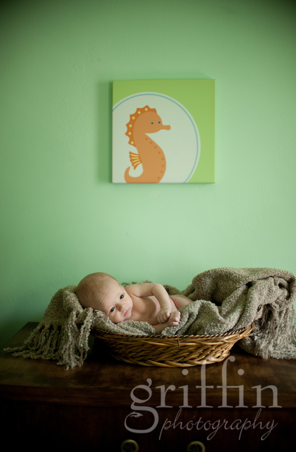 newborn in blanket on dresser with seahorse picture.