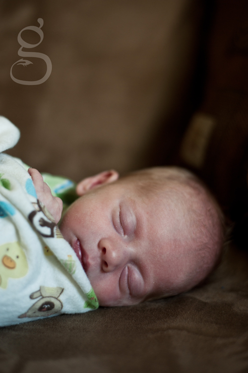 madison wi newborn photographer.