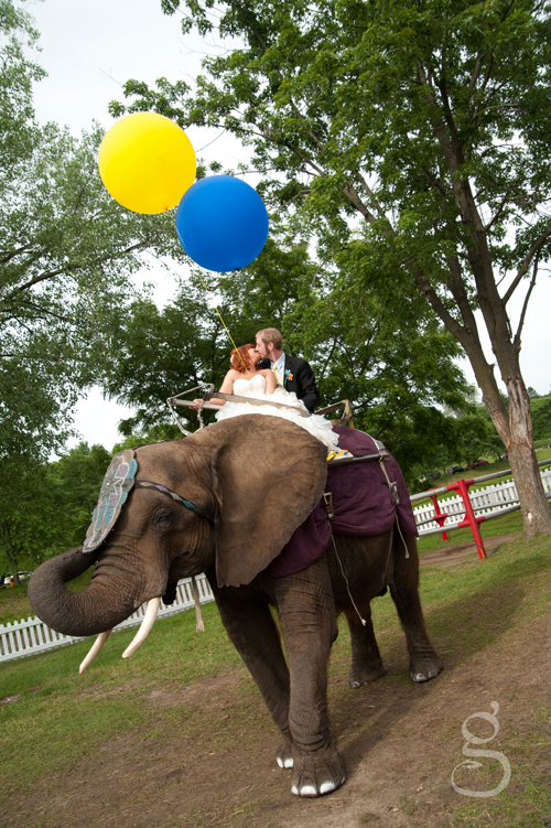 the bride and groom riding Tiny the elephant at the Circus World Museum.