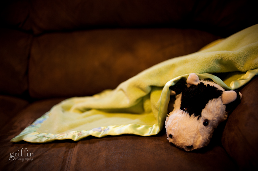 Cow napping under Jamie's soft green blanket.
