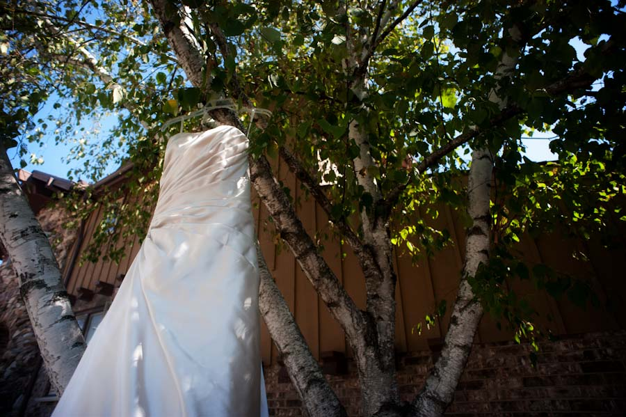 wedding gown hanging from a paper birch