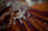 Wedding rings on a bed of purple and crystal.